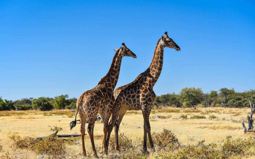 Park Narodowy Etosha – informacje praktyczne