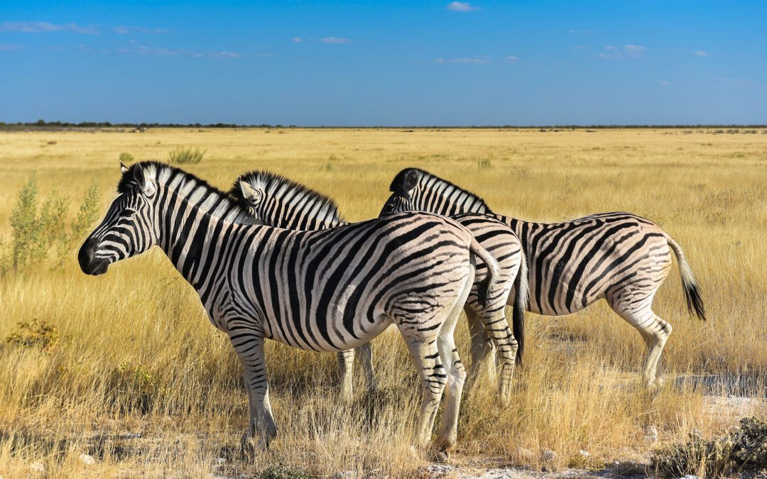Z dziećmi po szutrach Namibii cz.2 – Park Narodowy Etosha