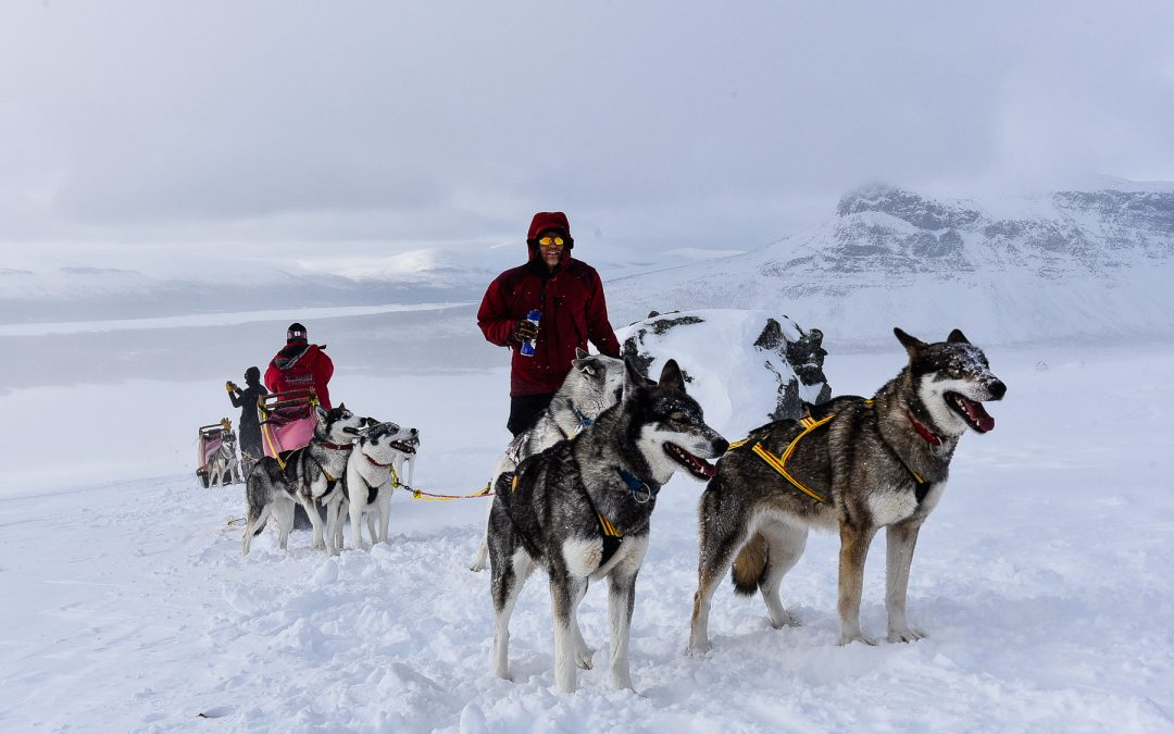 Psim zaprzęgiem po szlaku Kungsleden w Laponii