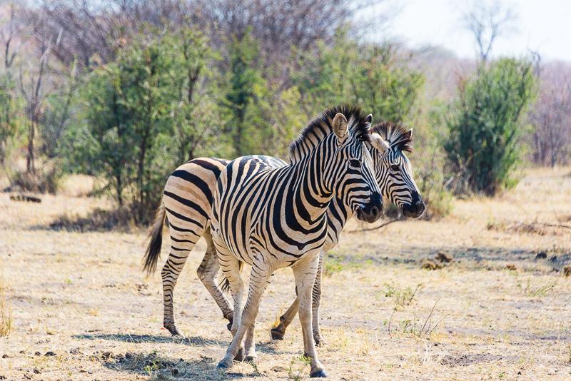 Self-drive safari w Afryce czyli wyprawa 4×4 – Namibia region Zambezi cz. 1